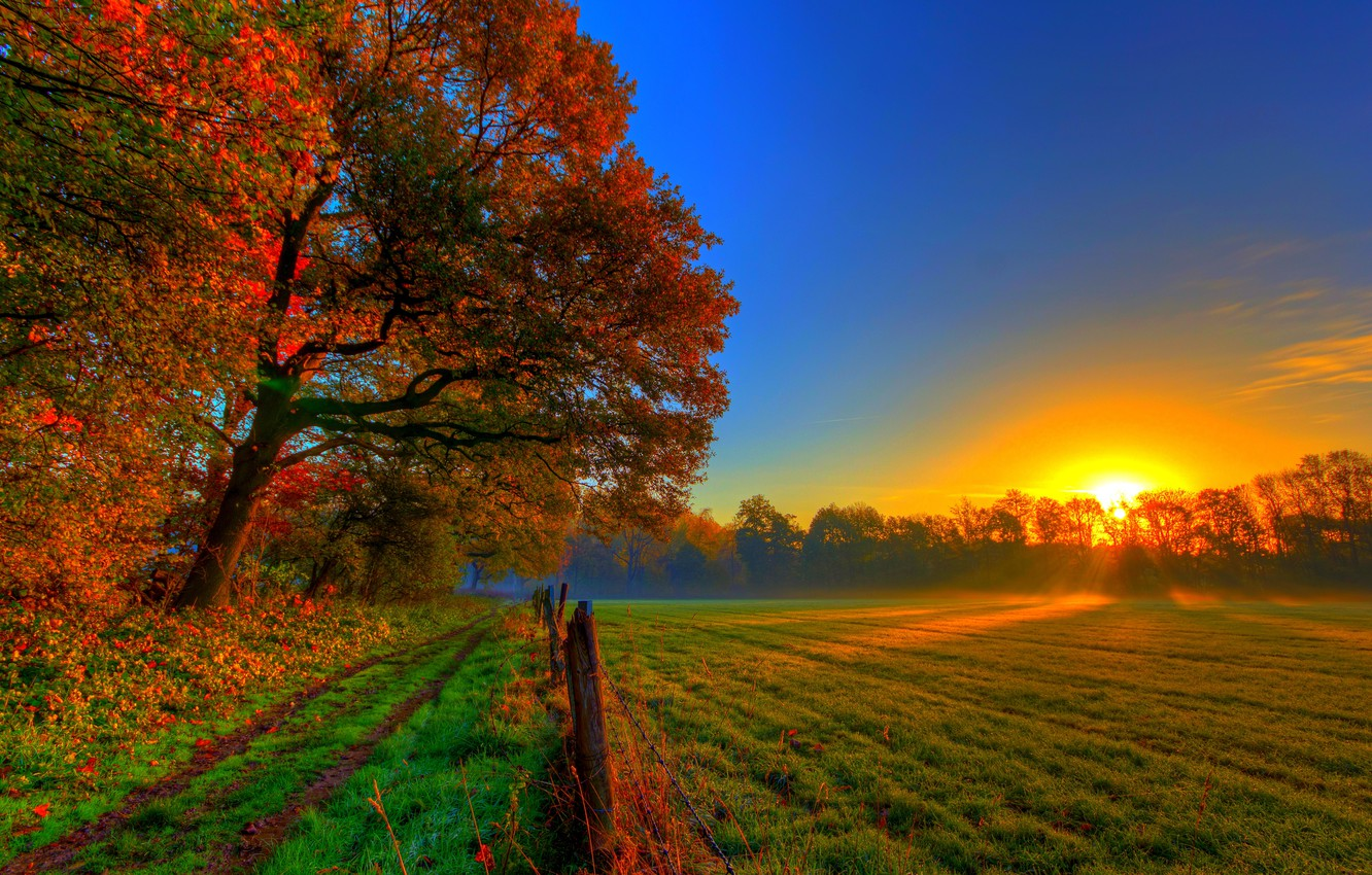 Photo wallpaper road, autumn, forest, grass, leaves, the sun, trees, sunset, nature, colors, colorful, meadow, grass, forest, …