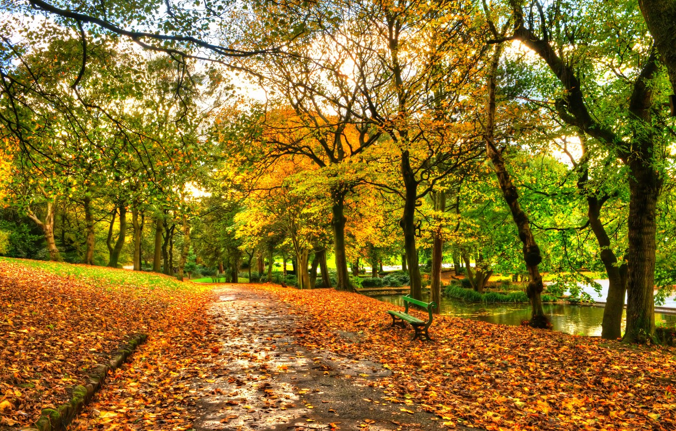 Photo wallpaper autumn, forest, the sky, leaves, water, trees, bench, nature, Park, river, view, hdr, walk, forest, …