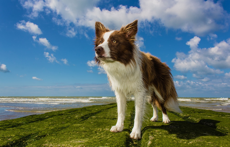 Photo wallpaper sea, wave, beach, wet, dog, horizon