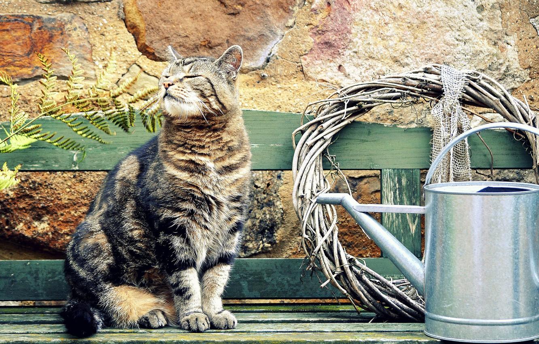Photo wallpaper summer, cat, bench, Koshak, Tomcat