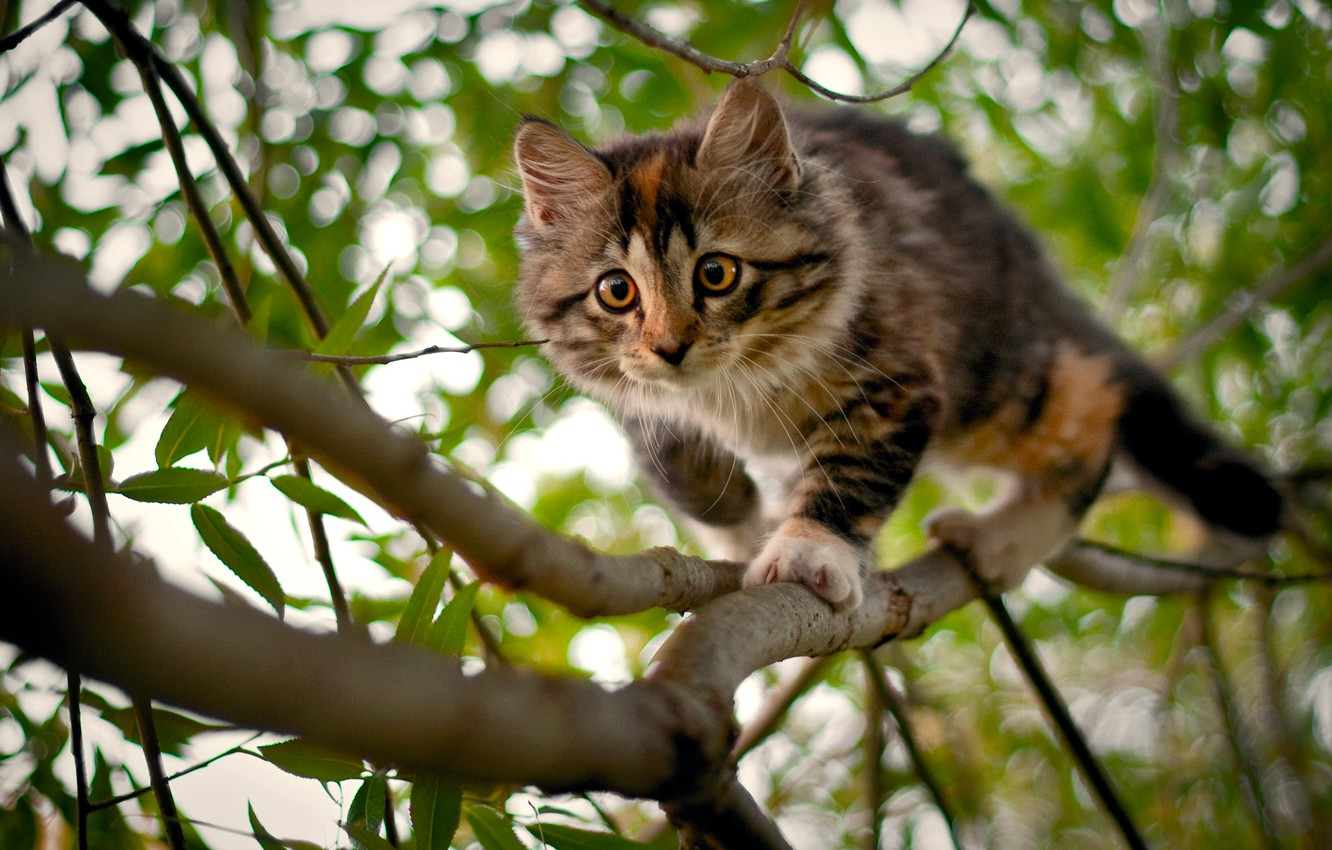 Photo wallpaper branches, kitty, tree