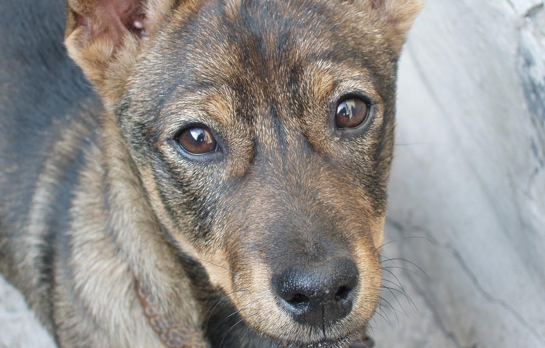 Photo wallpaper eyes, look, macro, eyes, dog, nose, spout, dog