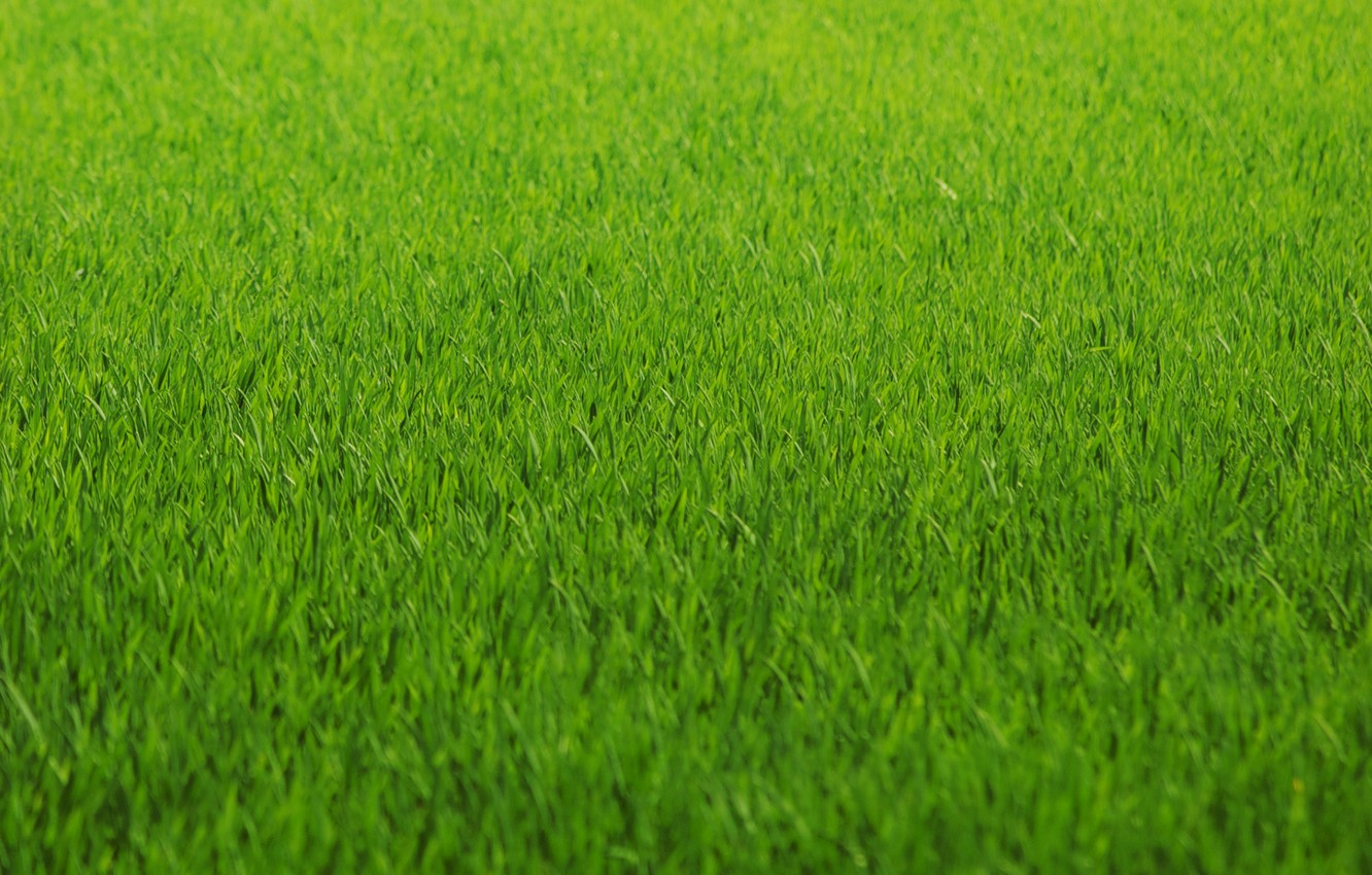 Photo Wallpaper Greens Gr Lawn Green Color Texture