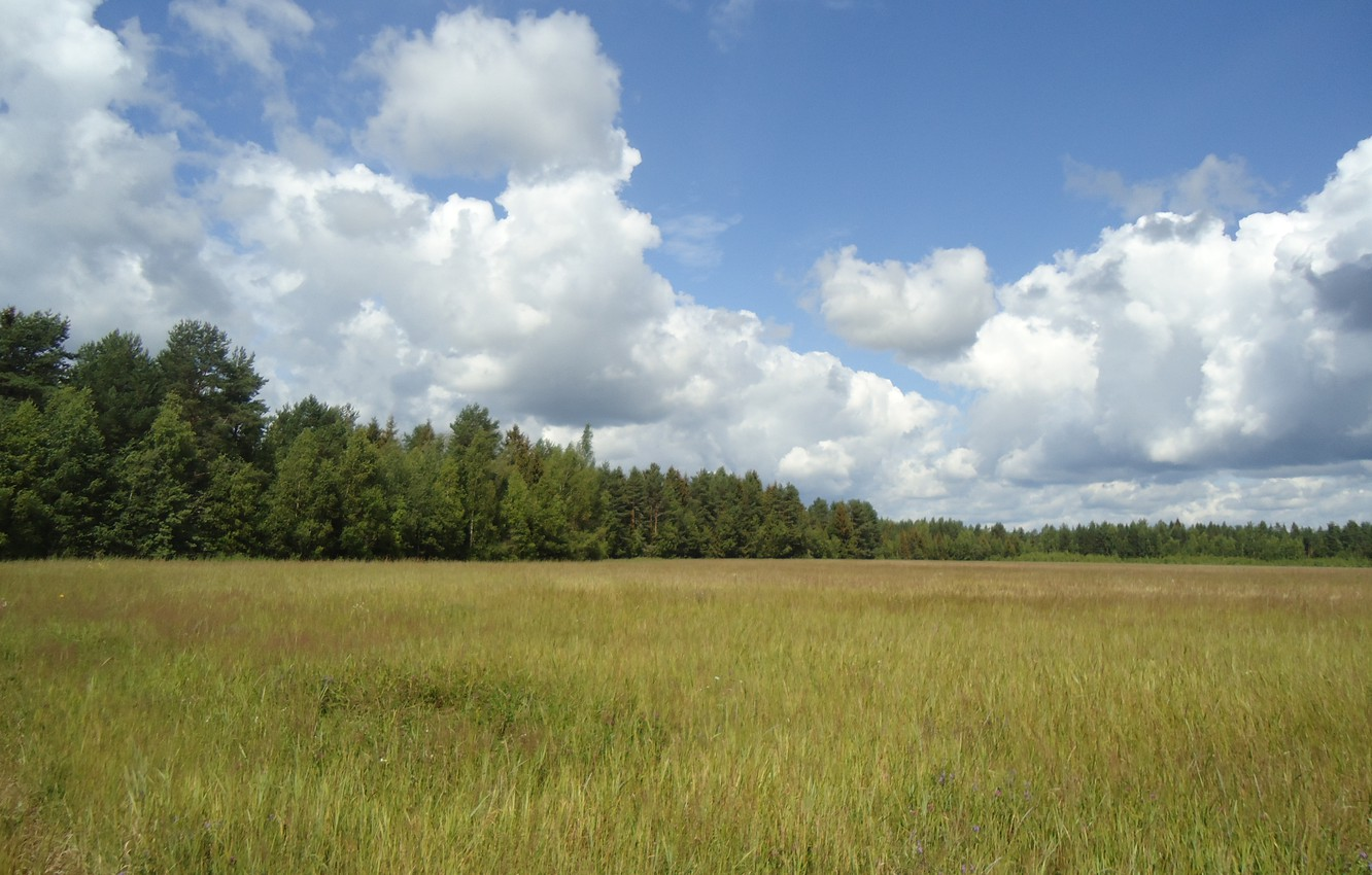Photo wallpaper forest, summer, the sky, clouds