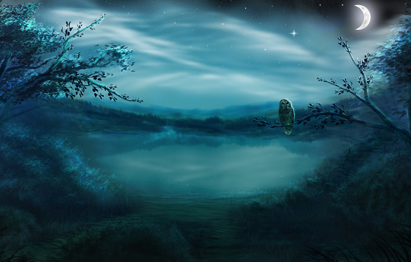 Photo wallpaper forest, stars, night, fog, lake, owl, bird, the moon, a month