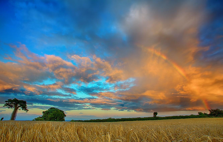 Photo wallpaper field, clouds, trees, rainbow
