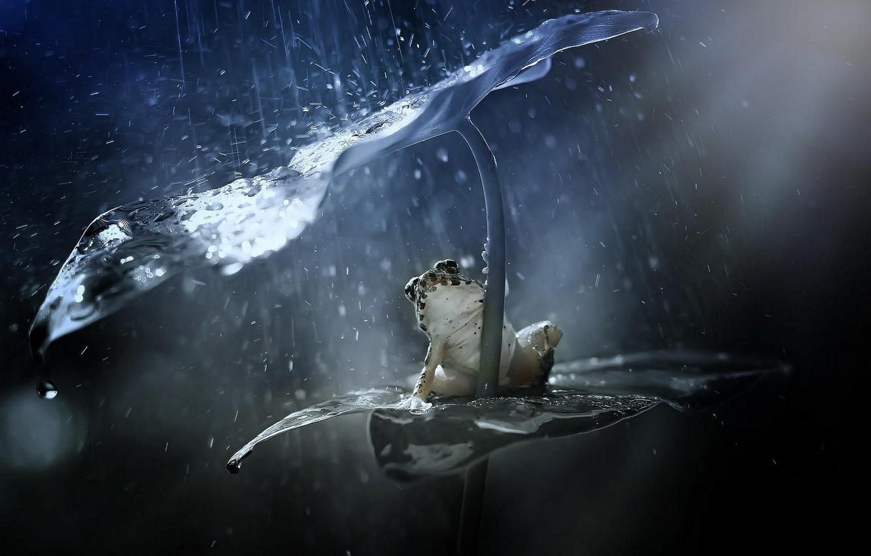 Photo wallpaper squirt, sheet, rain, frog