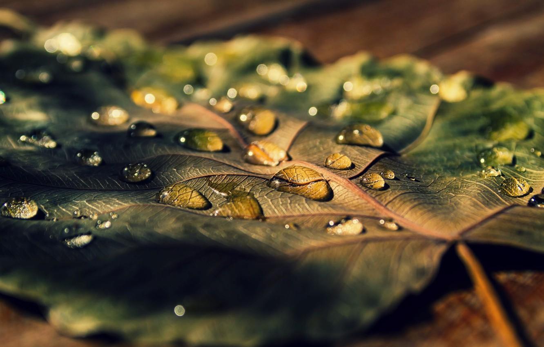 Photo wallpaper leaves, water, macro, Rosa, background, widescreen, Wallpaper, drop, leaf, wallpaper, leaf, widescreen, background, full screen, …