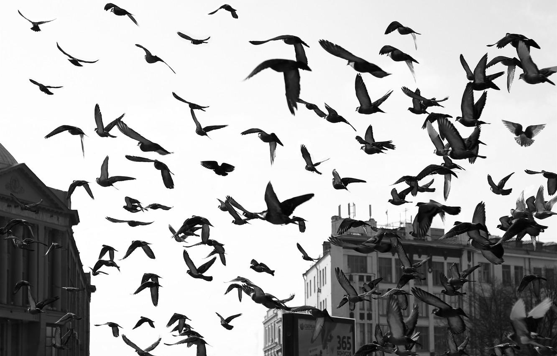 Photo wallpaper WINGS, FLIGHT, HOME, PACK, BUILDING, BIRDS, PIGEONS