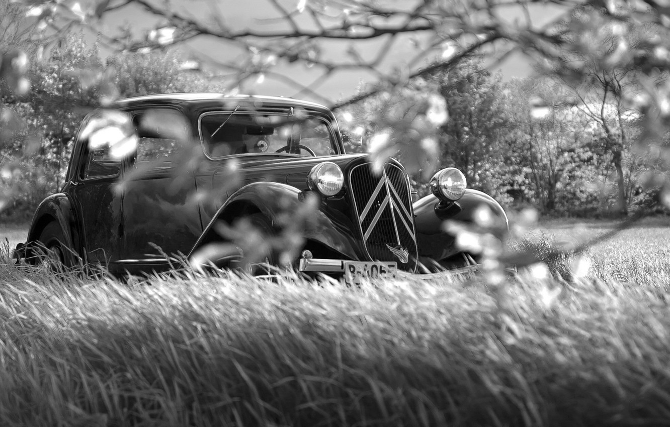 Photo wallpaper grass, branches, retro, black and white, Noir
