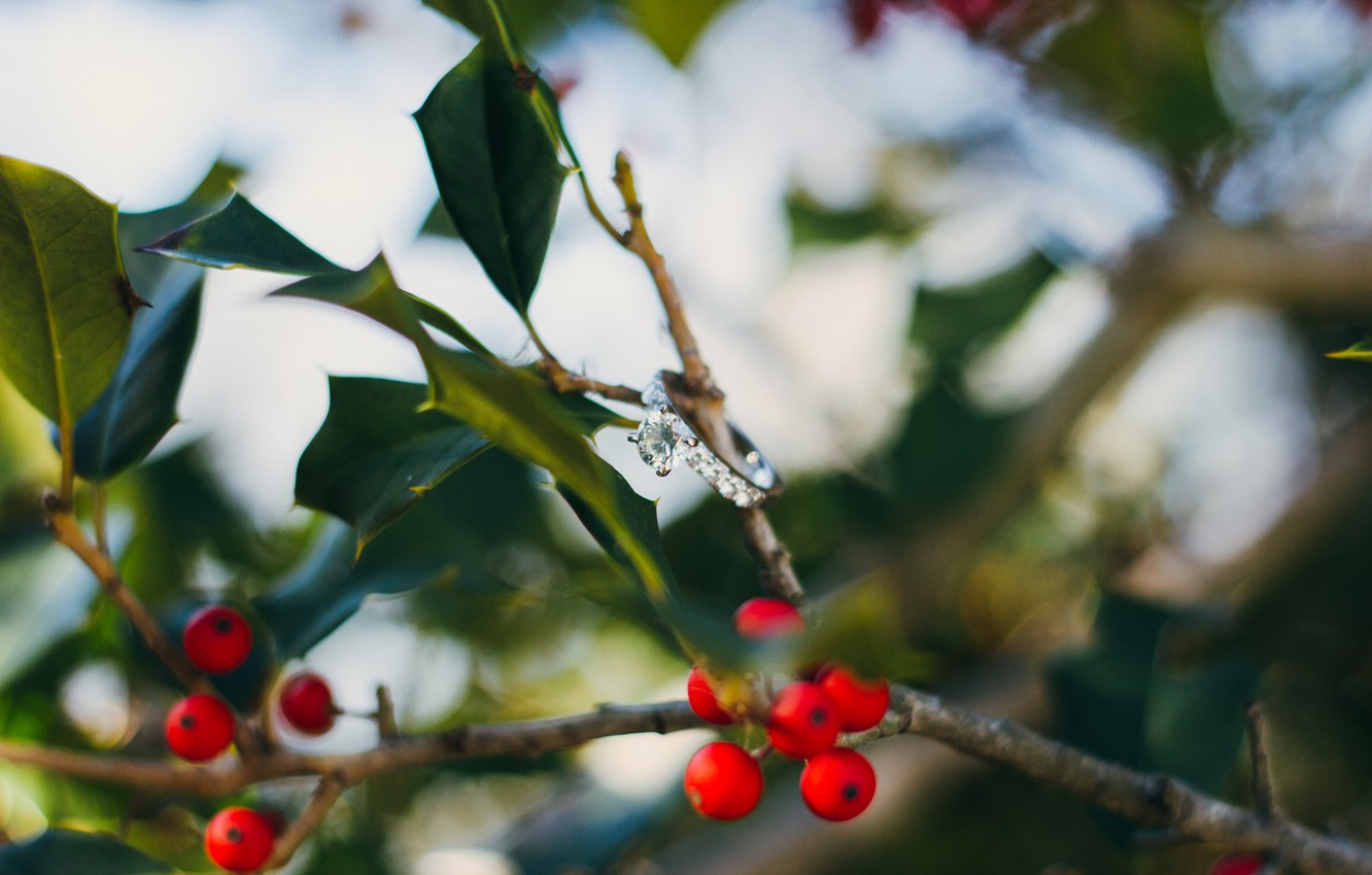 Photo wallpaper leaves, branches, berries, stone, ring, red