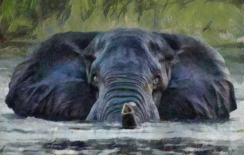 Photo wallpaper look, water, background, elephant, trunk