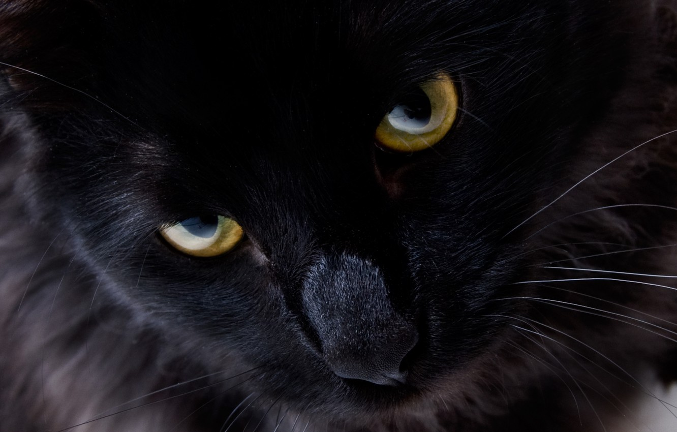 Photo wallpaper cat, eyes, look, black cat