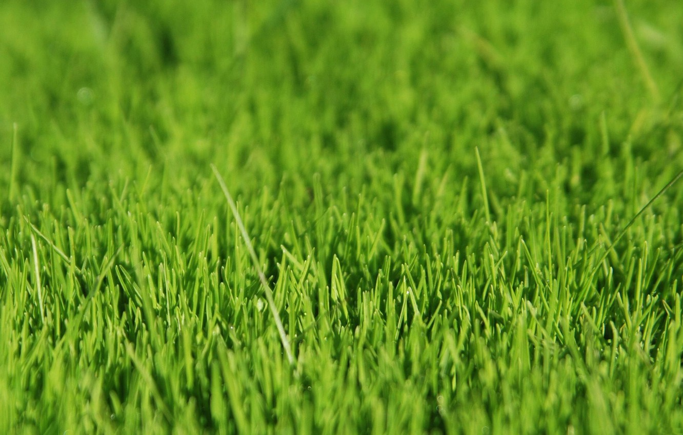 Photo wallpaper grass, green, grass