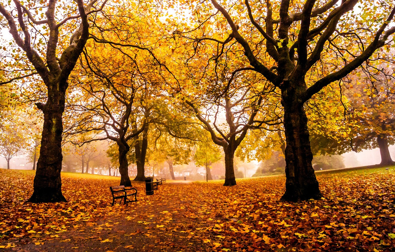 Photo wallpaper road, autumn, leaves, trees, Park, England, yellow, UK, alley, benches, benches, shop, Sheffield, Sheffield, Weston …