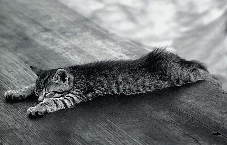 Photo wallpaper Koshak, Black and white, relaxed