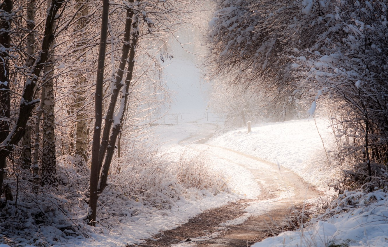 Photo wallpaper winter, road, forest, nature