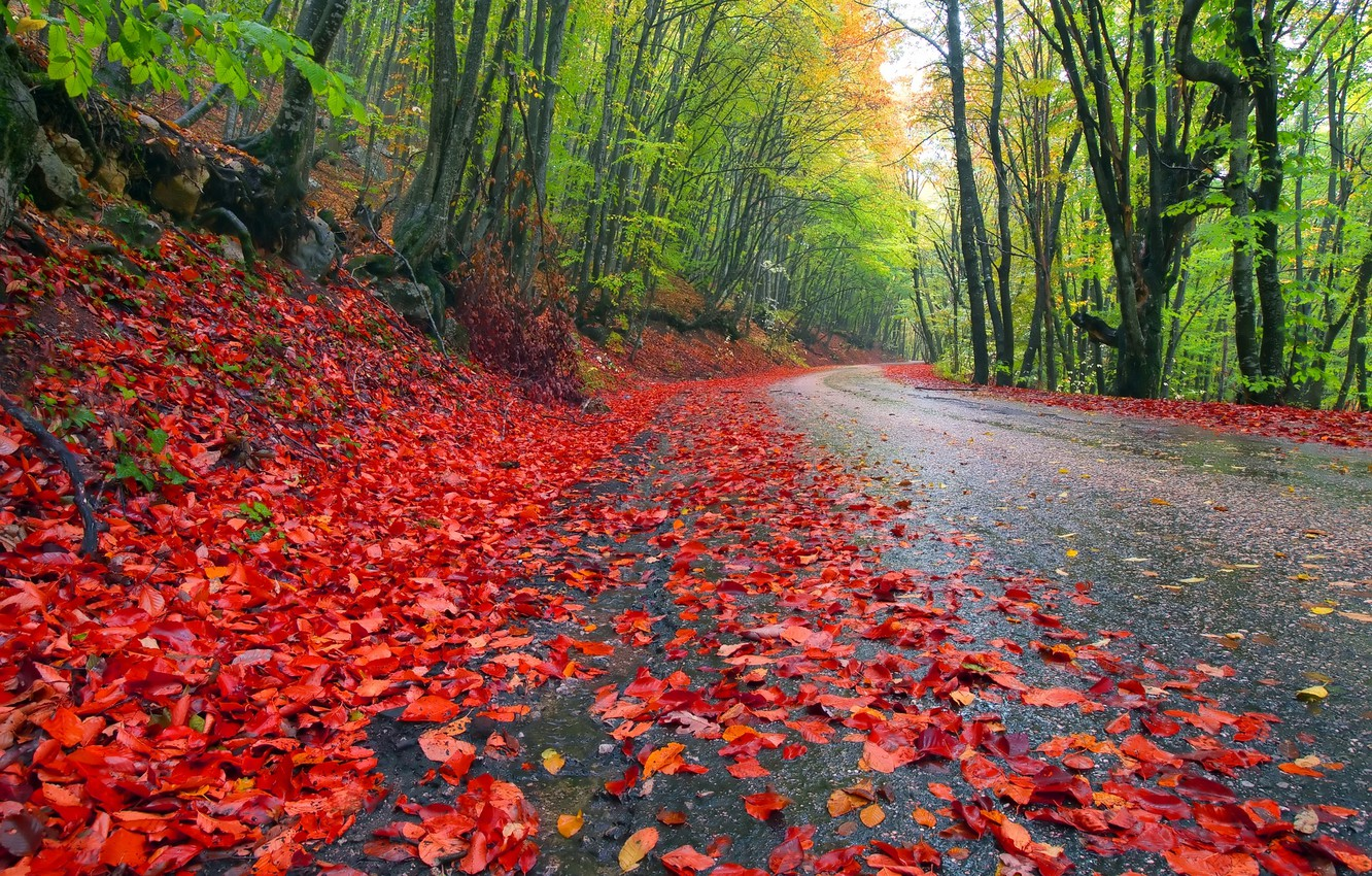 Photo wallpaper road, autumn, forest, the sky, leaves, trees, landscape, nature