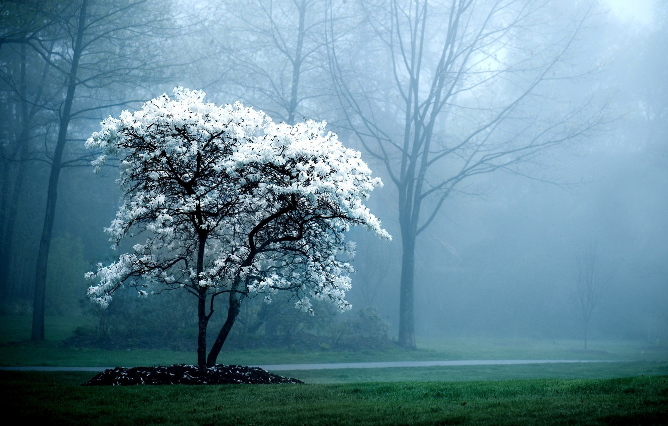 Photo wallpaper trees, nature, fog, background, tree, branch, Wallpaper, pictures, plants, the evening, wallpapers
