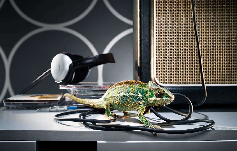 Photo wallpaper chameleon, wire, headphones, drives