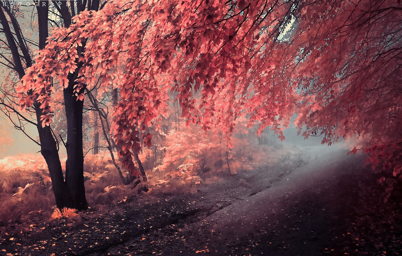 Photo wallpaper road, autumn, trees, painting