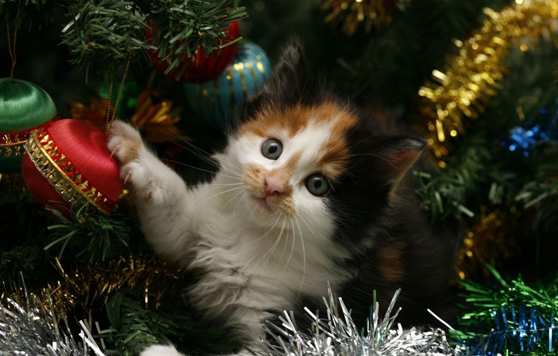 Photo wallpaper cat, cat, kitty, holiday, tree, new year, new year, tinsel, kitten, cat