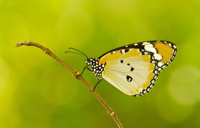 Photo wallpaper sprig, pattern, butterfly, plant, wings, moth