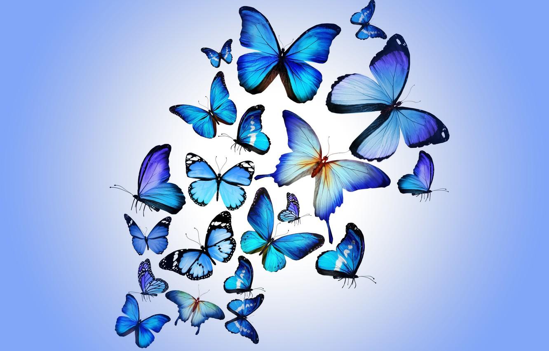Wallpaper Butterfly Colorful Blue Butterflies Design By