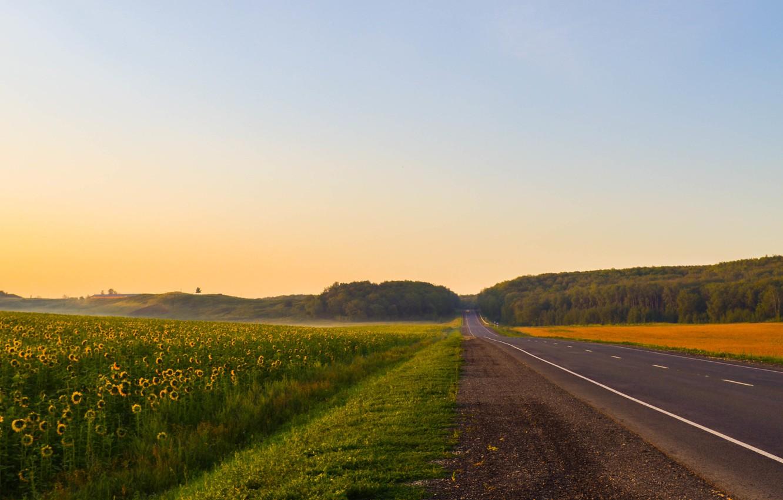 Photo wallpaper road, summer, sunflowers, landscape, nature, fog, dawn, landscapes, beautiful