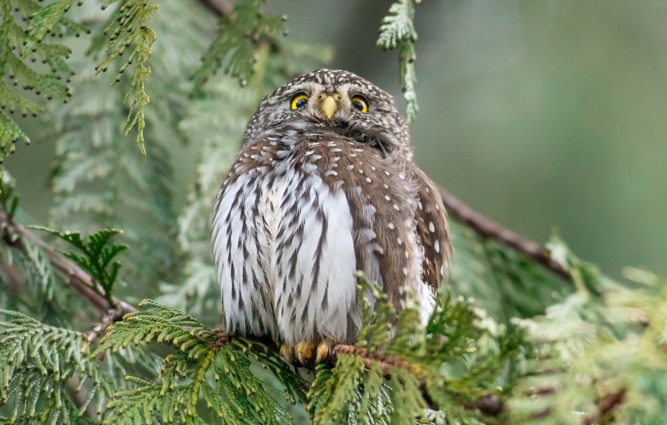 Photo wallpaper forest, nature, owl
