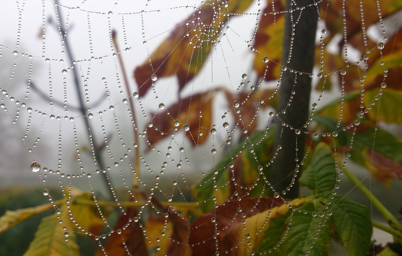 Photo wallpaper Macro, Drops, Web, Rosa
