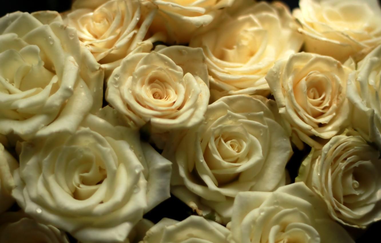 Photo wallpaper flowers, roses, bouquet