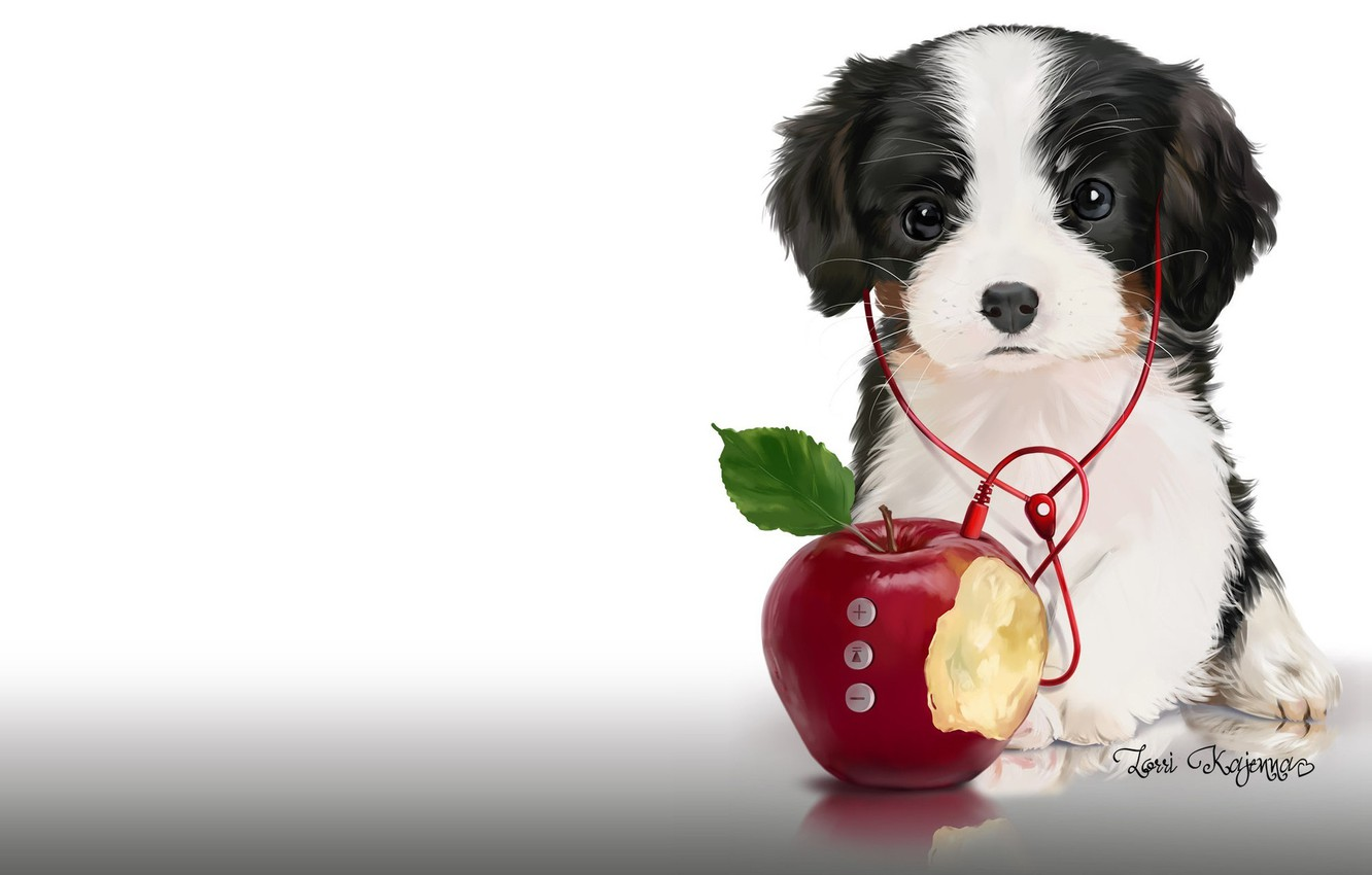 Photo wallpaper music, Apple, headphones, art, player, puppy, children's. Lorri Kajenna
