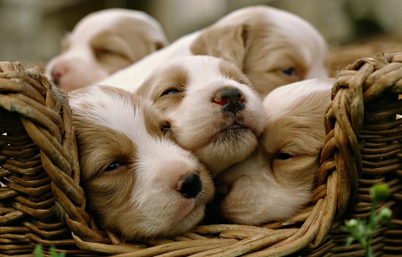 Photo wallpaper dogs, puppies, kids