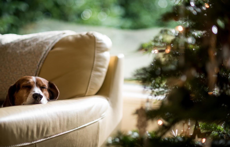 Photo wallpaper tree, dog, New Year, sleeping
