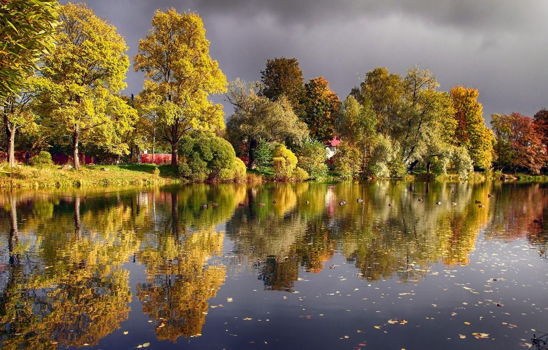 Photo wallpaper autumn, pond, duck, Voeikovo