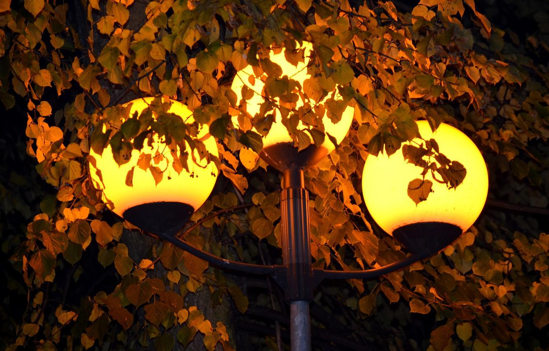 Photo wallpaper light, lights, yellow, foliage, lantern