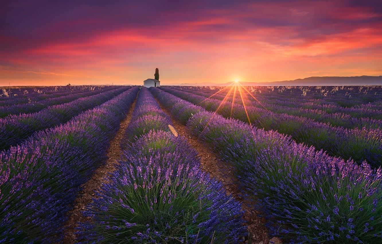 Photo wallpaper field, summer, the sun, light, lavender