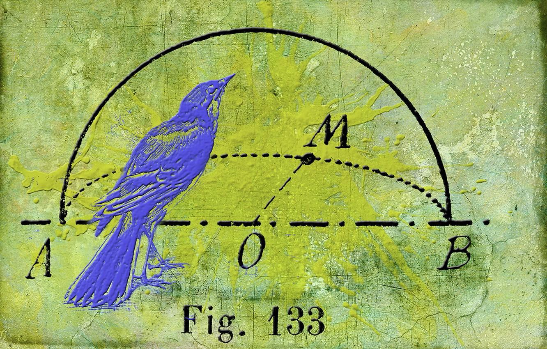 Photo wallpaper background, bird, texture