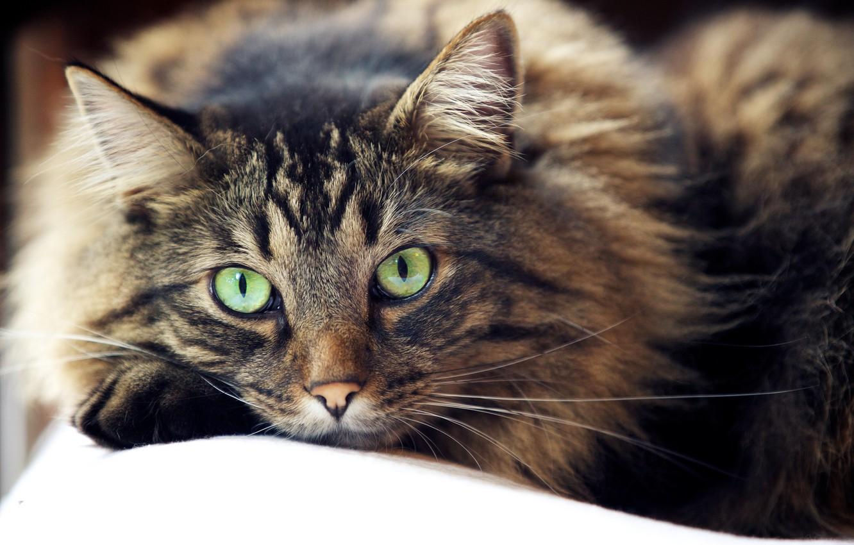 Photo wallpaper eyes, cat, mustache, look, wool, looks