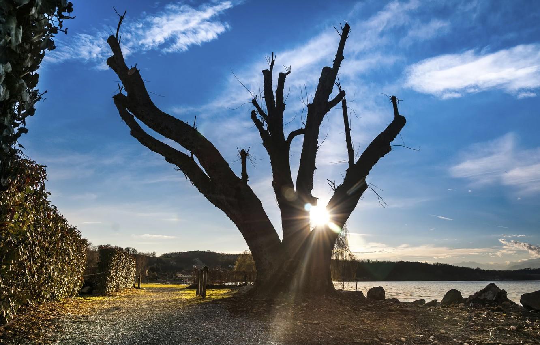 Photo wallpaper the sun, tree, shore