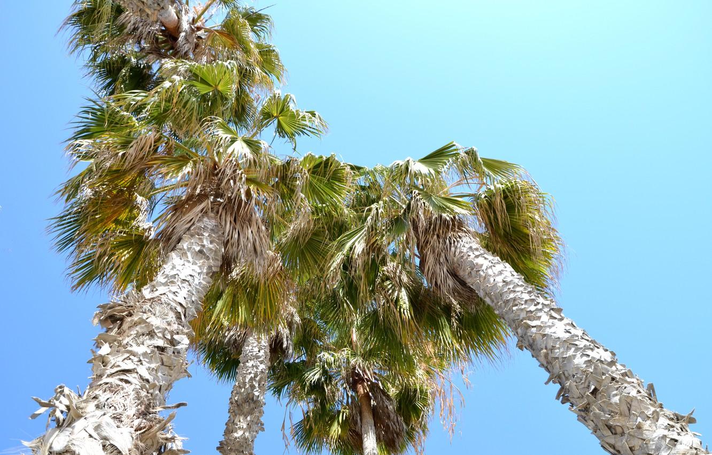 Photo wallpaper palm trees, CA, USA, Los Angeles, Santa Monica