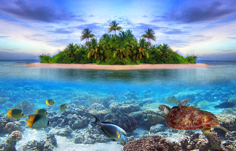 Photo wallpaper sea, fish, landscape, nature, Palma, collage, island, turtle