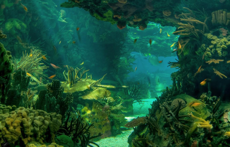 seabed underwater ocean fish