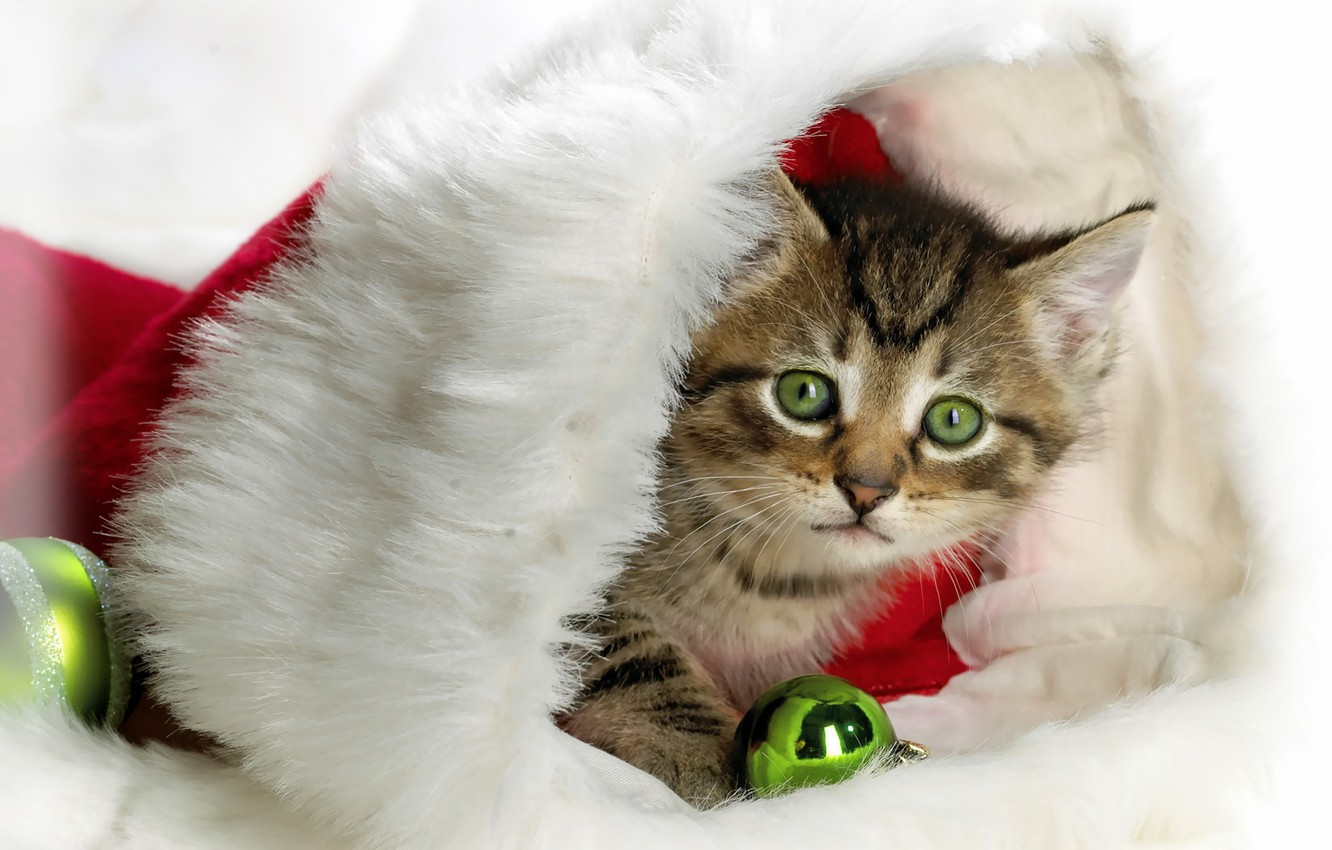 Photo wallpaper kitty, hat, new year