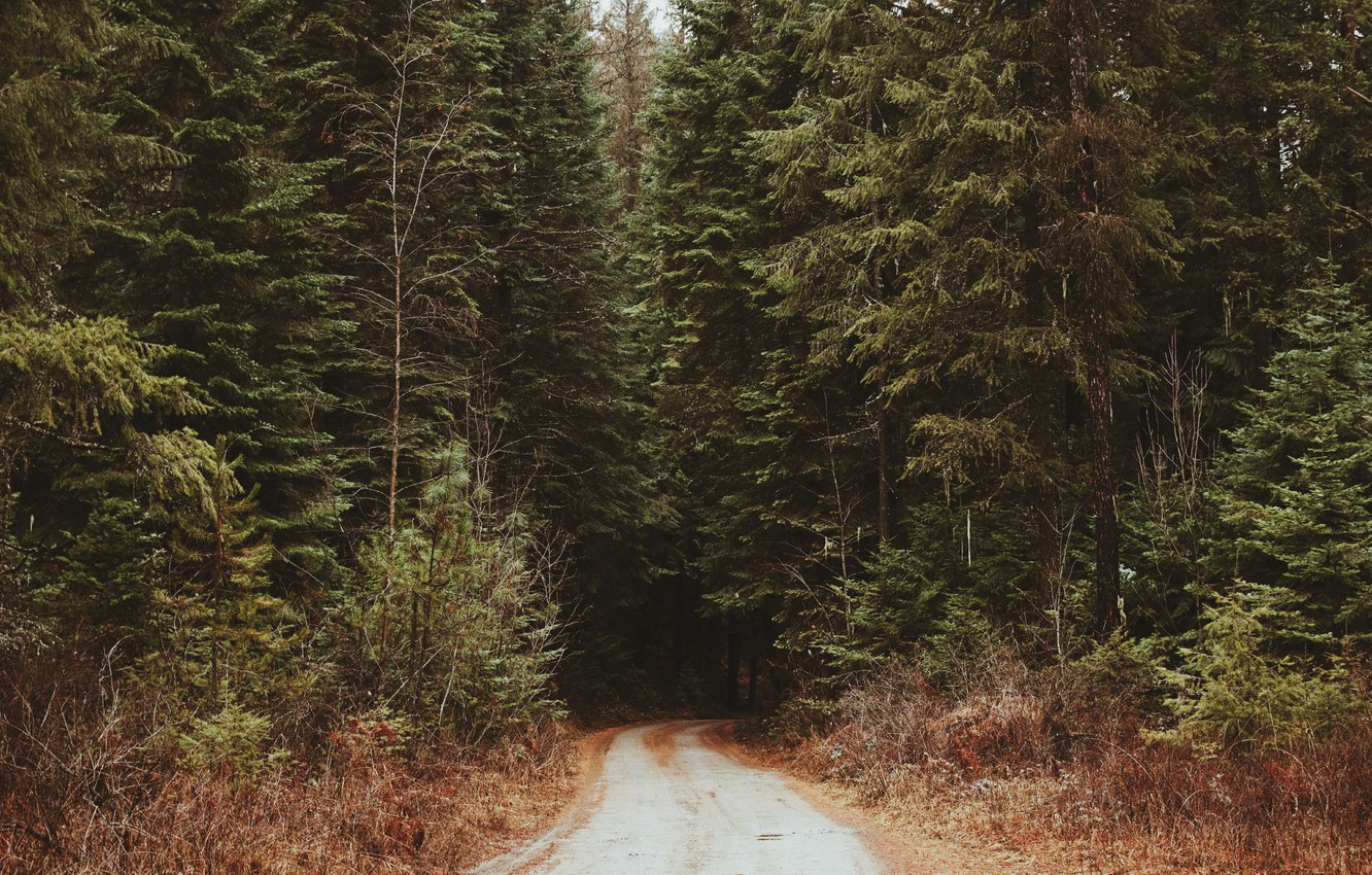 Photo wallpaper road, forest, thicket