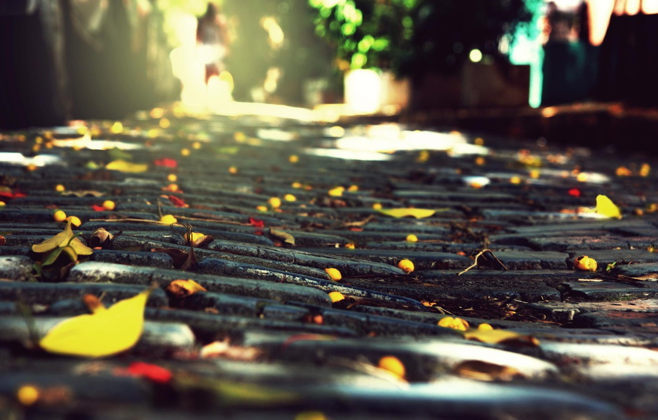 Photo wallpaper autumn, the city, stones, foliage, macadam