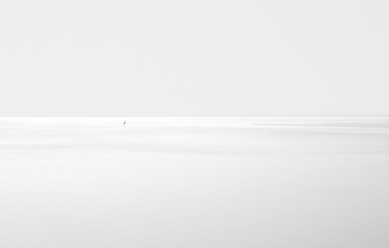 Photo wallpaper background, bird, silhouette