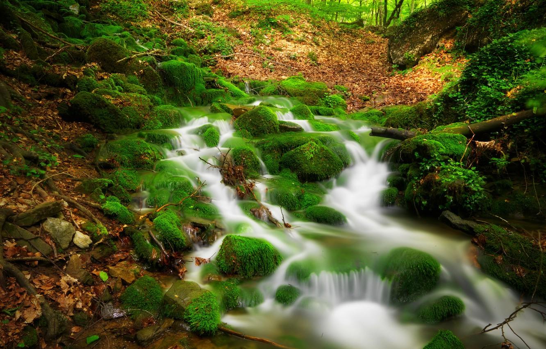 Photo wallpaper forest, trees, landscape, Nature, forest, river, trees, landscape, nature, view, scenery
