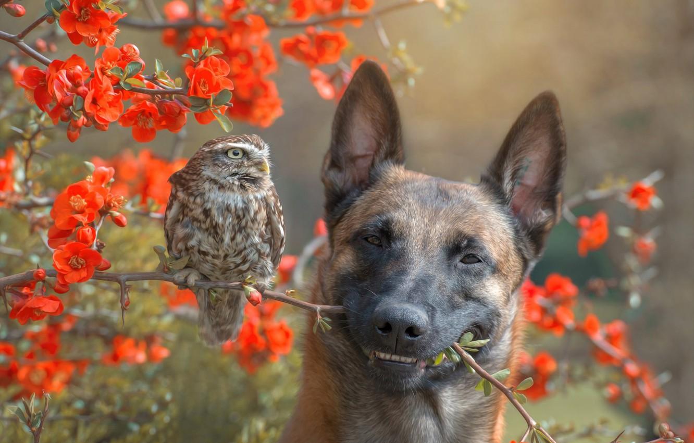 Photo wallpaper flowers, branches, nature, owl, bird, Bush, dog, dog